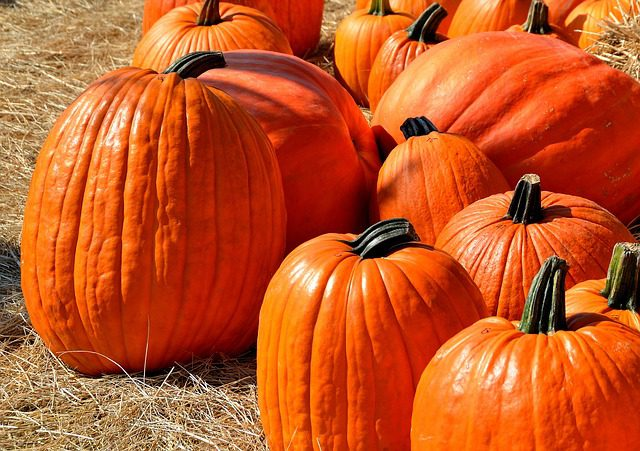 fall pumpkins Pixabay LRC